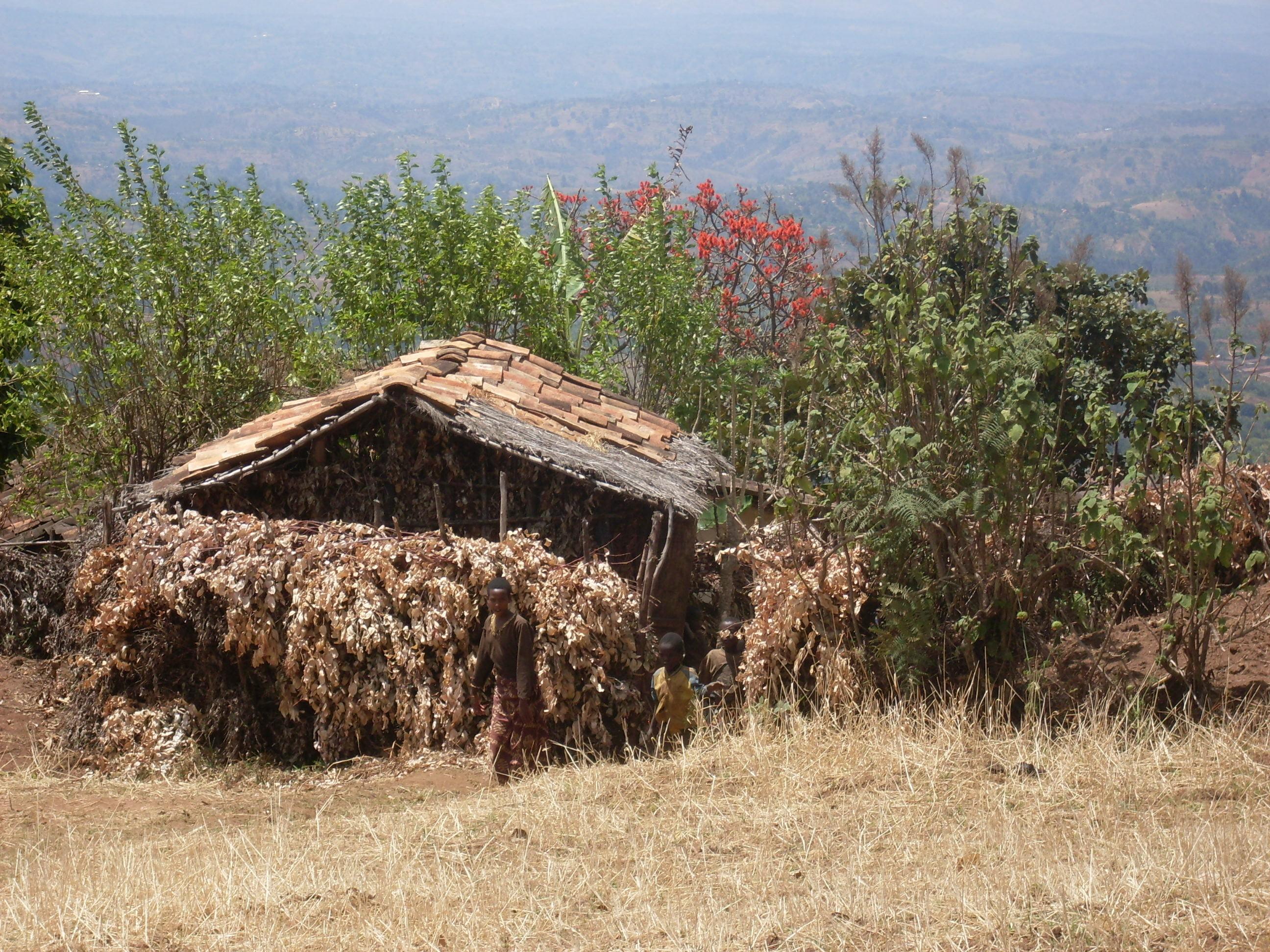 Viaţa pe muntele Banga